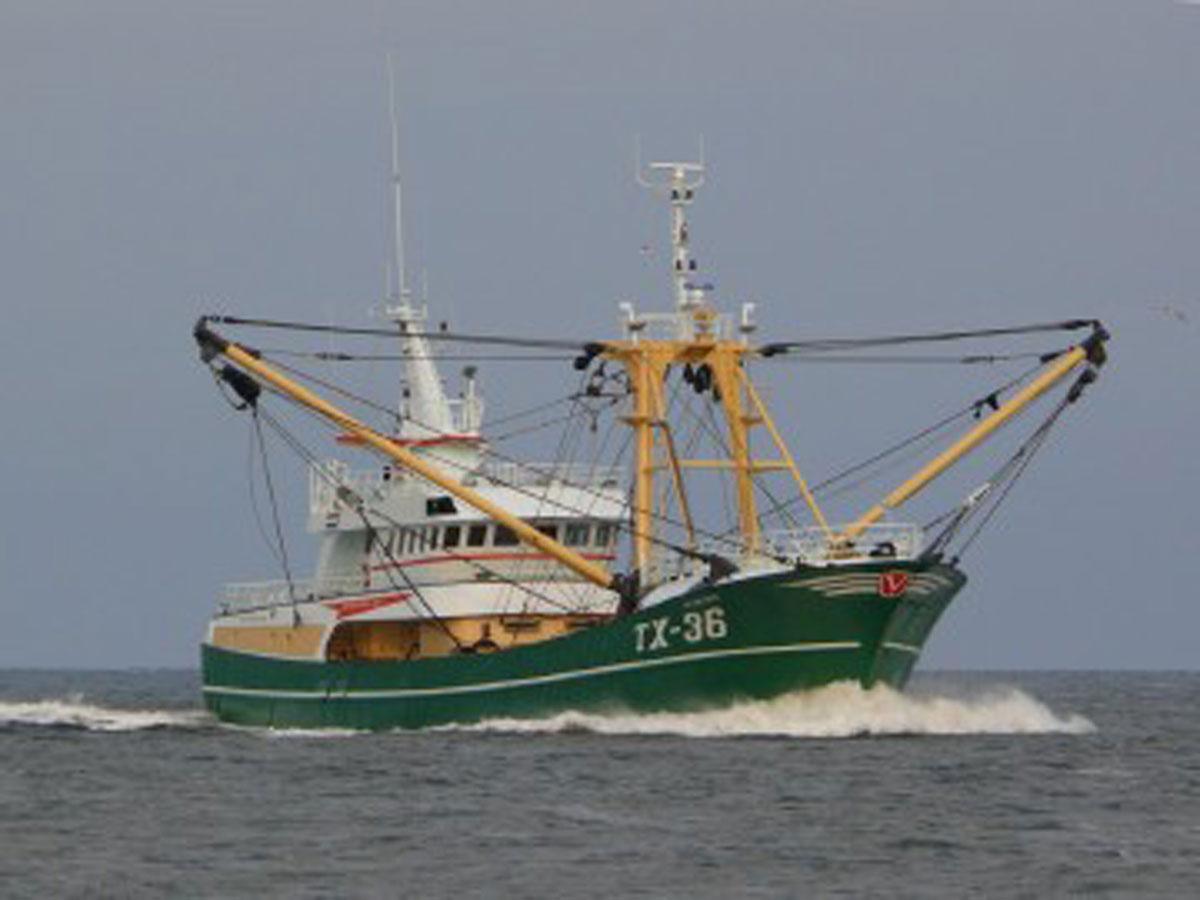 tx-36-hylke